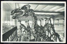 Musée Royal D'Histoire Naturelle - BRUXELLES - IGUANODON De Bernissart - Non Circulé - Not Circulated. - Museum