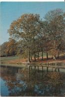 Paesaggio  : Alberi Che Si Specchiano Nel Fiume. - Cartoline