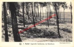 Begroeide Landduinen - Kalmthout - Kalmthout