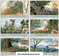Chromo Liebig Sang. 1265 ITA Piante Parassite ANNO 1932 - Liebig