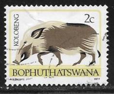 Bophuthatswana Scott # 6a Used Perf 14 Bush Pig,1977 - Bophuthatswana