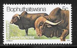 Bophuthatswana Scott # 51 MNH Cattle, 1979 - Bophuthatswana