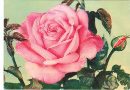 """Carte Postale Des Années 60 - Fleurs - Roses - """"Grace De Monaco"""" - Fleurs"""