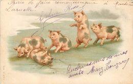 COCHONS - Quelques Uns De Mes Amis, Carte 1900 Illustrée. - Cochons
