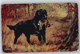 51233267 - Foxterrier / Terrier Retriever - Chiens
