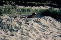 Photo Couleur Originale FKK, Naturisme & Nudisme - Jeune Femme Nue à La Lecture & Farniente Dans Les Dunes - Nu & Nature - Pin-up