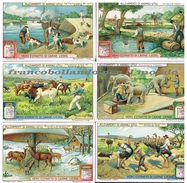 Chromo Liebig Unif. 1175 ITA Animali Utili ANNO 1926 - Liebig