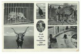 Logabirum Ostfriesischer Zoo 6 Bilder 1941 Feldpost - Leer