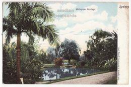 Australia Sydney NSW, Botanical Gardens View  C1900s Giovanardi UDB Vintage Postcard S8892 - Sydney
