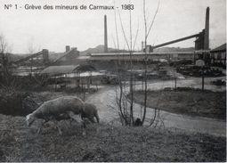 81 Carmaux - Grève Des Mineurs - Moutons - Carmaux