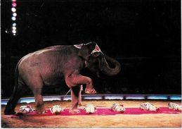 CPM Cirque Circus Cirk éléphant Non Circulé édition L'aventure Carto N° 25  KNIE - Circus