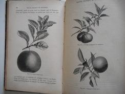 BOTANIQUE, PLANTES, 1885, TRAITE PRATIQUE DE BOTANIQUE, ED. LAMBERT, GRAVURES PLANTES - 1801-1900