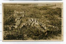 Malaya Cameron Highlands Tiger Shot Near Village Postally Used 1937 4c Pahang Orange Stamp Tanah Rata - Malaysia