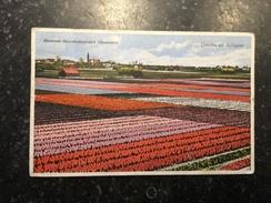17Z - Champ Tulipe Groeten Uit Hillegom - Holanda