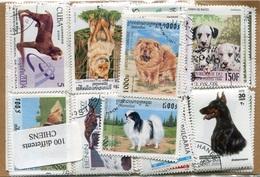 RC 6277 CHIENS POCHETTE DE 100 TIMBRES DIFFERENTS - Dogs