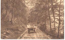 Rochefort - CPA - Paysage Au Bois Des Falizes - Rochefort
