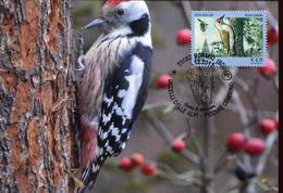 28647 Italia, Maximum 2013 Picchio,pivert,specht,woodpecker - Specht- & Bartvögel