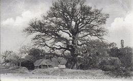 18)  SAINTE  MONTAINE  - Le Gros Chêne à La Grand Maison 9 Mètres De Tour - Autres Communes