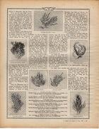 LE MONDE ET LA SCIENCE N°42a  PAGE 1329  A 1344    LA MER (FIN)  MEUBLE (DEBUT) - Other