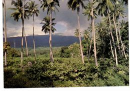 "^ Grande Comore - Ylang Ylang , Cocotiers Et "" Karthala"" - Comoros"