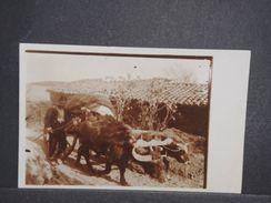 HONGRIE - Carte Photo De La Vie Rurale En 1916 , Attelage De Bœufs - L 10373 - Hongrie
