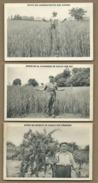 5 CPA - Effets Des Ammonitrates,De La Cianamide De Chaux ,nitrate De Chaux,de Sulfate D'Ammoniaque(agricole,agriculture) - Cultures
