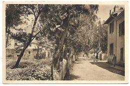 LES ILES D'HYERES - PORQUEROLLES - La Rue Principale - Porquerolles
