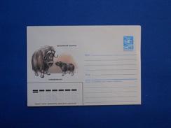 Postal Stationery, Bull, Bison - Koeien