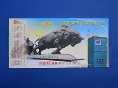 Bull, Bison - Koeien