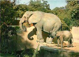 PIE 17-Tx-9942 : ELEPHANTS - Elephants