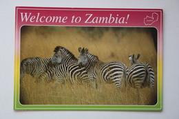 AFRICA, ZAMBIA, GRANT'S ZEBRA   Old Postcard - Zambia
