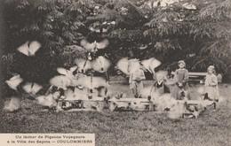 UN LACHER DE PIGEONS VOYAGEURS A LA VILLA DES SAPINS A COULOMMIERS - TRES BELLE CARTE ANIMEE - PEU COURANTE -  TOP !!! - Vögel