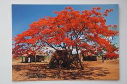AFRICA, MALAWI Near Salima  Old Postcard - Malawi