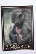 Zimbabwe - Hwange National Park - Baboon Monkey - Old Postcard - Zimbabwe