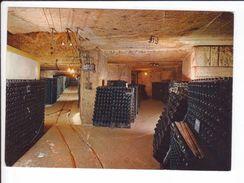 CP - SAINT EMILION -Cloître Des Cordeliers - Intérieur D'une Galerie Des Caves - Vignes