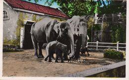 Cpsm SAÎGON, ZOO, La Famille éléphant Au Complet  (53.32) - Vietnam