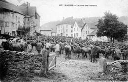 CPA De MAICHE (Doubs) - La Foire Des Chevaux. Edition Simon.  Numéro 197. Circulée En 1907. Bon état. - Altri Comuni