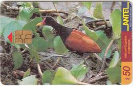 URUGUAY - Bird, Gallito De Agua(119a), 03/00, Used - Birds