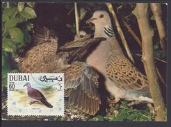 "DUBAI - Carte Maximum  ""Turtle Dove - Tourterelle Des Bois"" Cachet De Dubai - Ed. Yvon - B/TB - - Dubai"