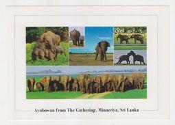 New WILD ELEPHANTS In Sri Lanka Unused POSTCARD | MINNERIYA - Sri Lanka (Ceilán)