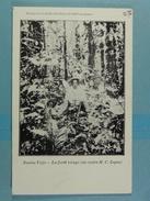 Platine Et Or De Novita-Viejo La Forêt Vierge ( Au Centre M C.Lopez) - Colombia