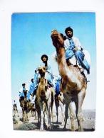Post Card From Morocco Maroc Carte Postale 1965 Animals Camel Camels The Blue Men - Marokko (1956-...)