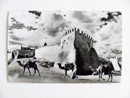 Post Card From Morocco Maroc Carte Postale 1959 Animals Camels Agadir - Marokko (1956-...)