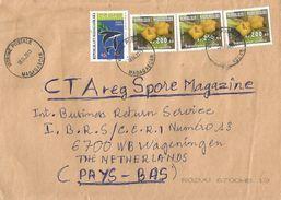 Madagascar 2013 Vitrine Postale Dolphin Endemic Shrub Pentachlaena Latifolia Ar200 Flowers Cover - Madagaskar (1960-...)