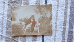 Chien Bouledogue Anglais ……….asta 9-71 - Photos