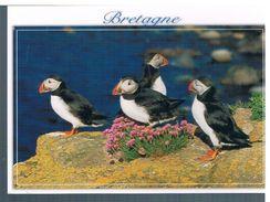 MACAREUX MOINE - Oiseaux