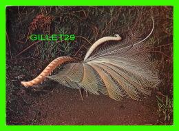 BIRDS - OISEAUX -  THE LYREBIRD - NATIVE OF THE SOUTH-EAST OF AUSTRALIA - - Oiseaux