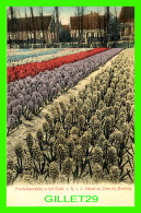 HAARLEM, PAYS-BAS - HIACINTHENVELDEN IN A HET ETABL. V. R, D. SCHOOL EN ZOON BIJ HAARLEM - 1900 - J, H. SCHAEFER - - Haarlem