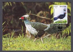BHUTAN 2003 MAXIMUM CARD BIRDS - KALIJ PHEASANT - Gallináceos & Faisanes