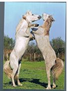 CHEVAUX CAMARGUAIS - Horses